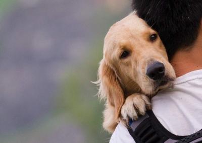 Proseguono i lavori del Gruppo Consiliare per tutelare il benessere degli animali